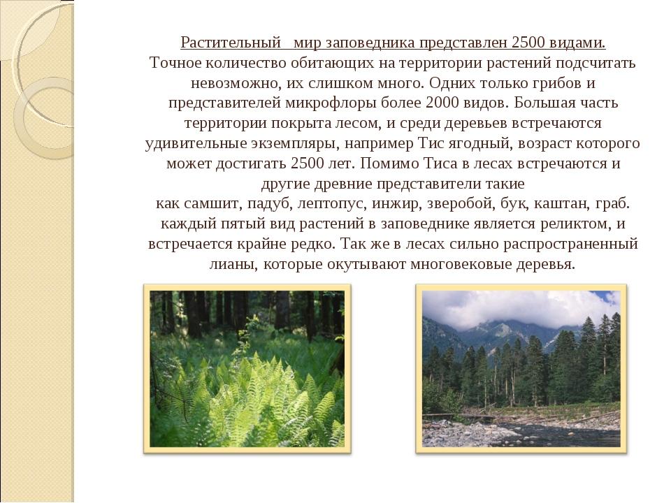 1. Водные растения - ряска малая, болотник весенний. Растительный мир запове...