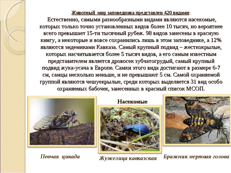 Животный мир заповедника представлен 420 видами: Естественно, самыми разнооб...