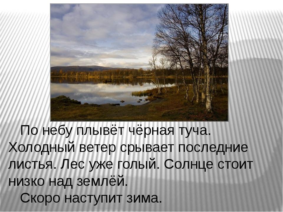 По небу плывёт чёрная туча. Холодный ветер срывает последние листья. Лес уже...