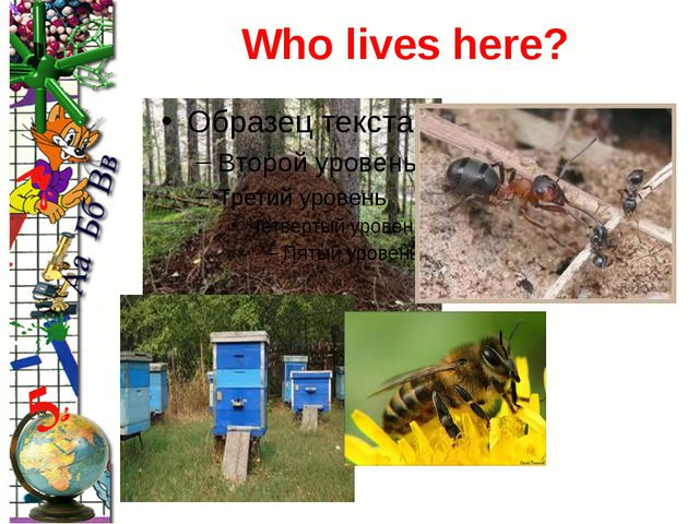 Who lives here? ProPowerPoint.Ru