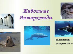 Животные Антарктиды Выполнили: учащиеся 1В класса