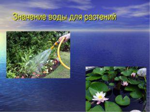 Значение воды для растений