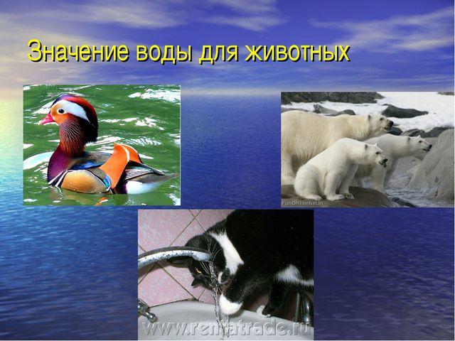 Значение воды для животных