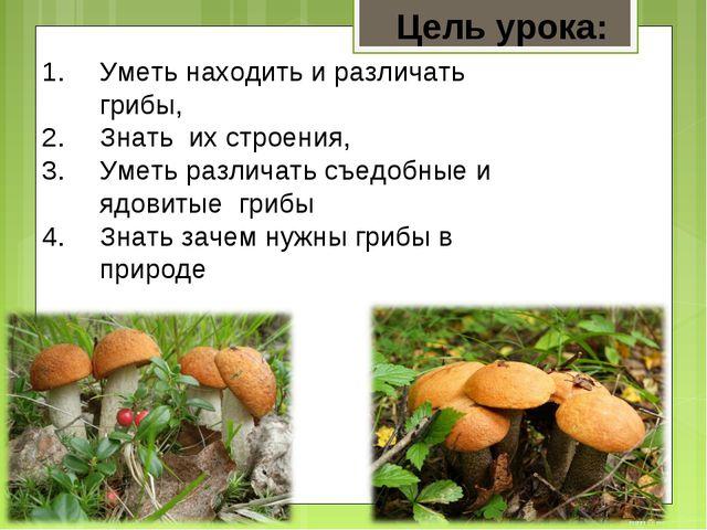 Уметь находить и различать грибы, Знать их строения, Уметь различать съедобны...