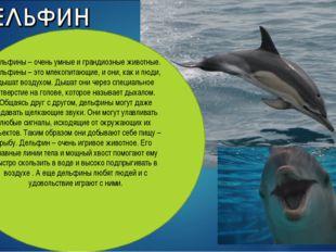 Дельфины – очень умные и грандиозные животные. Дельфины – это млекопитающие,