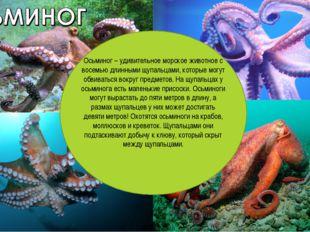 Осьминог – удивительное морское животное с восемью длинными щупальцами, котор