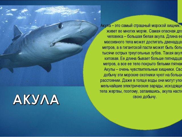 Акула – это самый страшный морской хищник. Она живет во многих морях. Самая о...