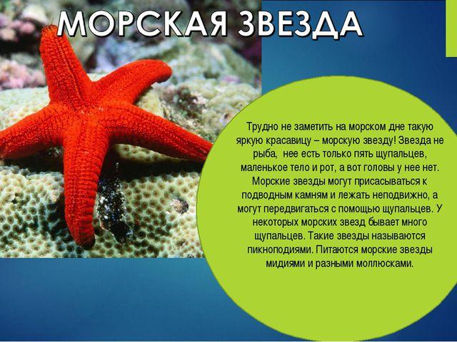 Трудно не заметить на морском дне такую яркую красавицу – морскую звезду! Зве...