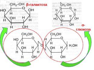 ЛАКТОЗА β-галактоза α-глюкоза