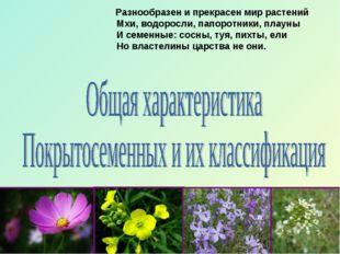 Разнообразен и прекрасен мир растений Мхи, водоросли, папоротники, плауны И