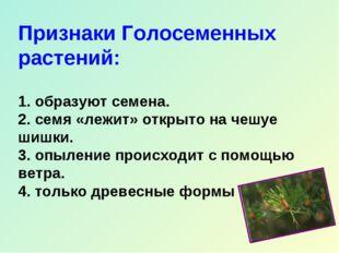 Признаки Голосеменных растений: 1. образуют семена. 2. семя «лежит» открыто н
