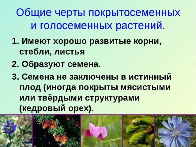 Общие черты покрытосеменных и голосеменных растений. 1. Имеют хорошо развитые...