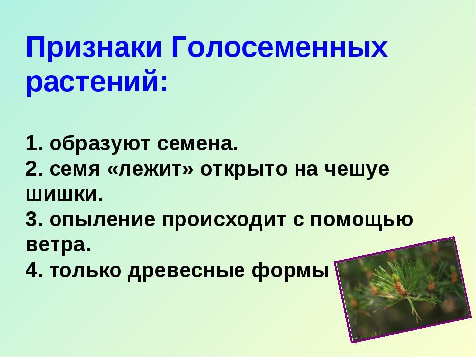 Признаки Голосеменных растений: 1. образуют семена. 2. семя «лежит» открыто н...