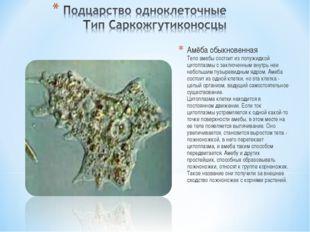 Амёба обыкновенная Тело амебы состоит из полужидкой цитоплазмы с заключенным