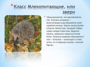 Обыкновенный ёж, или европейский ёж (лат. Erinaceus europaeus) — млекопитающе