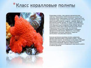 Коралловые полипы, класс морских кишечнополостных животных. Представляют соб