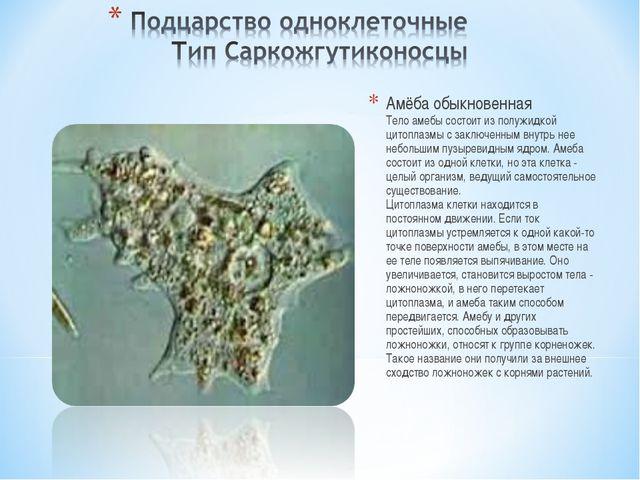 Амёба обыкновенная Тело амебы состоит из полужидкой цитоплазмы с заключенным...