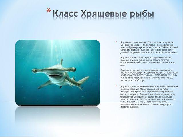 Акула-молот одна изсамых больших морских существ. Еесредний размер— 4-5ме...