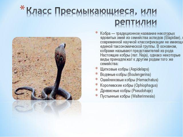 Кобра — традиционное название некоторых ядовитых змей из семейства аспидов (E...