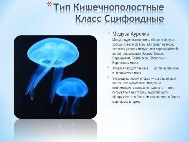 Медуза Аурелия Медуза аурелия это самая обычная медуза, хорошо известной всем...