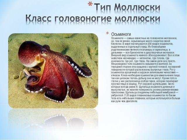 Осьминоги Осьминоги — самые известные из головоногих моллюсков, но, тем не ме...