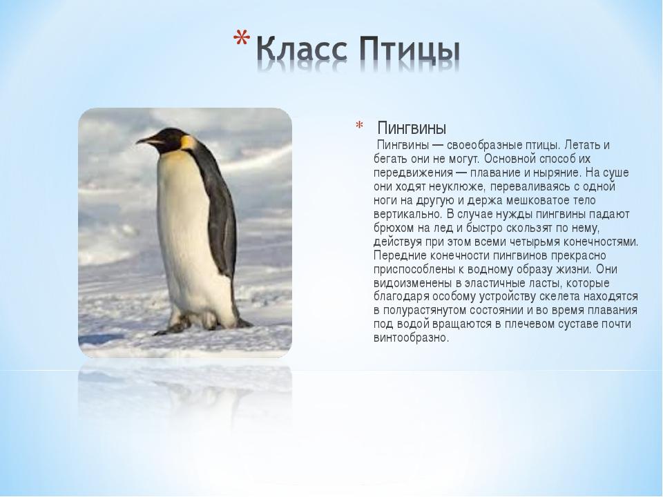 Пингвины Пингвины — своеобразные птицы. Летать и бегать они не могут. Основн...