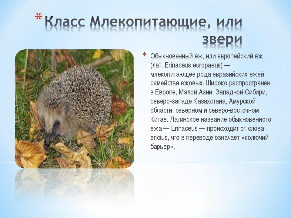 Обыкновенный ёж, или европейский ёж (лат. Erinaceus europaeus) — млекопитающе...