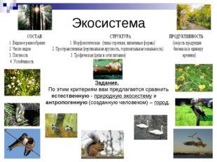 Экосистема Задание. По этим критериям вам предлагается сравнить естественную