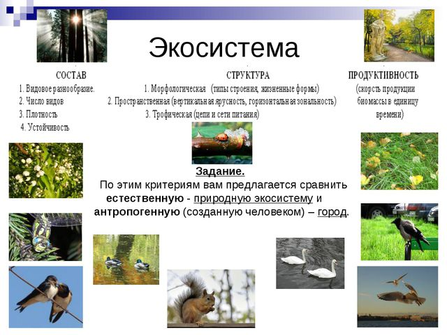 Экосистема Задание. По этим критериям вам предлагается сравнить естественную...