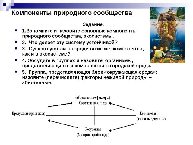 Компоненты природного сообщества Задание. 1.Вспомните и назовите основные ком...