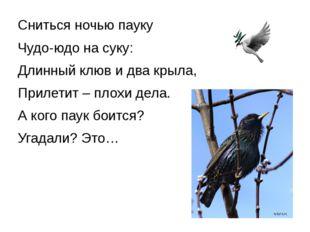Сниться ночью пауку Чудо-юдо на суку: Длинный клюв и два крыла, Прилетит – пл