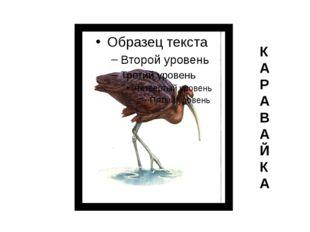 К А Р А В А Й К А