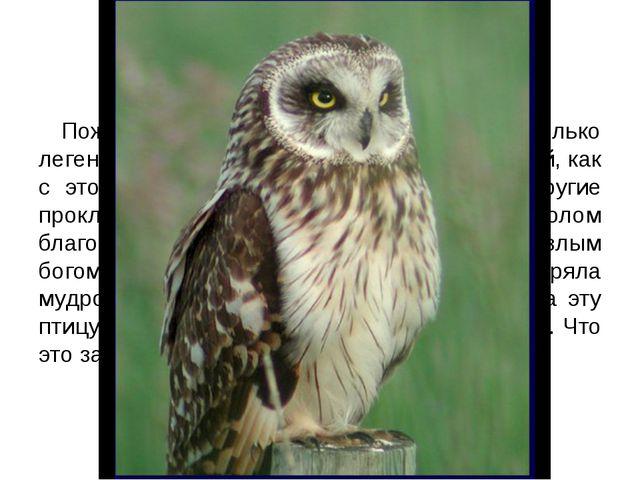 2 УРОК - ИСТОРИЯ Пожалуй, ни об одной птице не сложено столько легенд, ни с о...