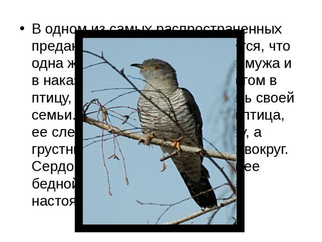 В одном из самых распространенных преданий об этой птице говорится, что одна...