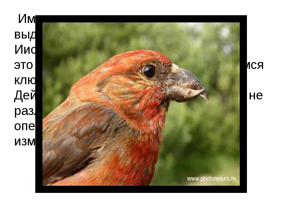 Именно эти птицы прилетели и выдернули клювом гвозди, которыми Иисус Христос...