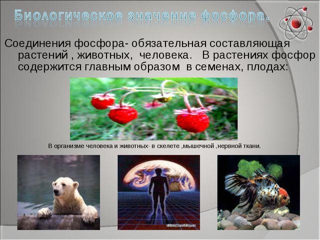Соединения фосфора- обязательная составляющая растений , животных, человека....