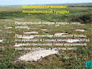 Особенности мохово-лишайниковой тундры Растительный покров тундры очень уязви