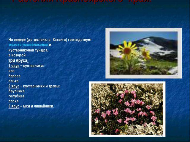 Растения Красноярского края. На севере (до долины р. Хатанга) господствует мо...