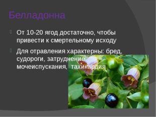 Белладонна От 10-20 ягод достаточно, чтобы привести к смертельному исходу Для