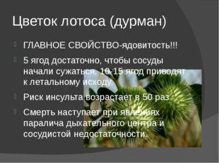 Цветок лотоса (дурман) ГЛАВНОЕ СВОЙСТВО-ядовитость!!! 5 ягод достаточно, чтоб