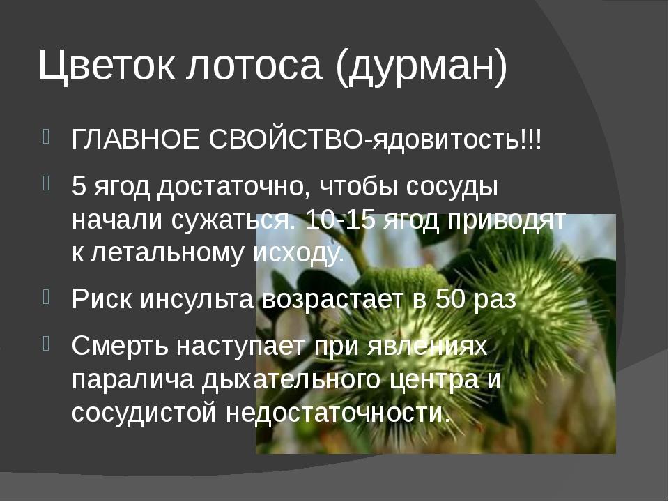 Цветок лотоса (дурман) ГЛАВНОЕ СВОЙСТВО-ядовитость!!! 5 ягод достаточно, чтоб...
