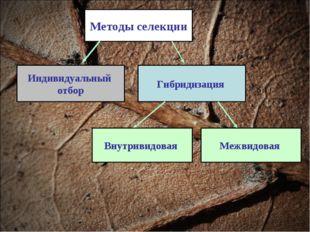 Методы селекции Индивидуальный отбор Гибридизация Межвидовая Внутривидовая