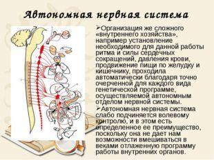 Автономная нервная система Организация же сложного «внутреннего хозяйства», н