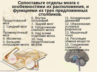 Сопоставьте отделы мозга с особенностями их расположения, и функциями из трех