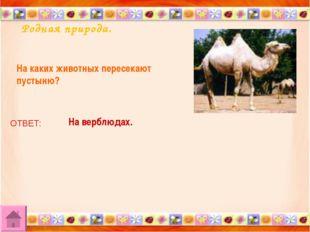 Родная природа. На каких животных пересекают пустыню? ОТВЕТ: На верблюдах.