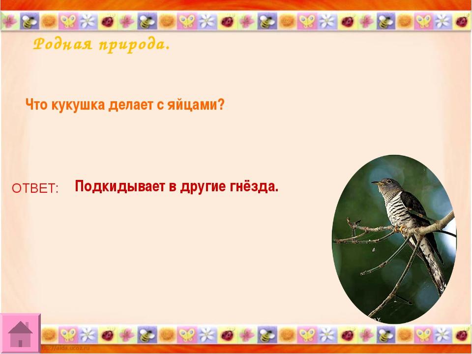 Родная природа. Что кукушка делает с яйцами? ОТВЕТ: Подкидывает в другие гнёз...