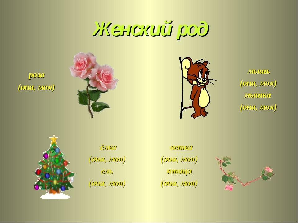 Женский род роза (она, моя) мышь (она, моя) мышка (она, моя) ёлка (она, моя)...