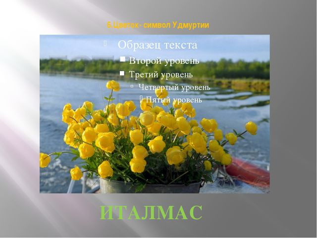 6.Цветок- символ Удмуртии ИТАЛМАС