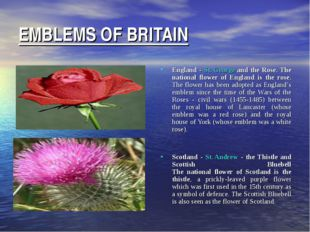 EMBLEMS OF BRITAIN England - St. George and the Rose. The national flower of