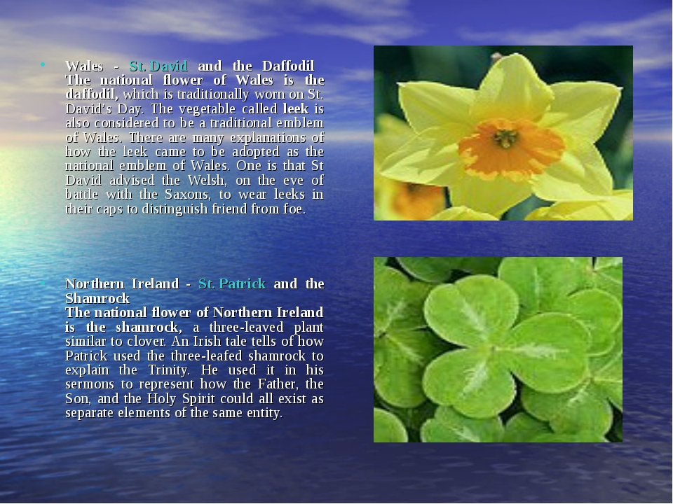 Wales - St. David and the Daffodil The national flower of Wales is the daffo...
